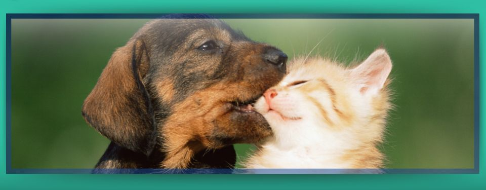 Your Pets are Family Here! - puppy & kitten