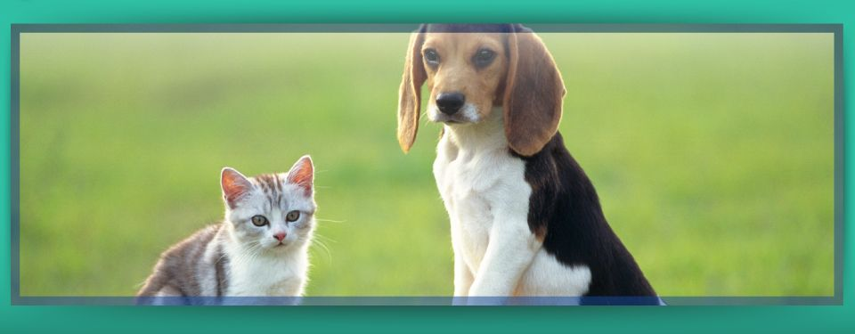 Your Pets are Family Here! - Dog and cat